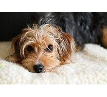 Puppy portrait Photographic Print