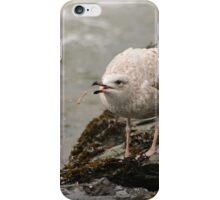Playful gull iPhone Case/Skin