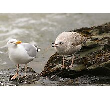 Playful gull Photographic Print