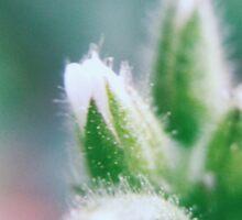 Flora 2 Sticker