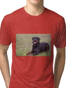Rottweiler black relaxes in the park Tri-blend T-Shirt