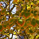 Rainbow Edges - Slowly Changing Leaves, Celebrating the Arrival of Autumn by Georgia Mizuleva