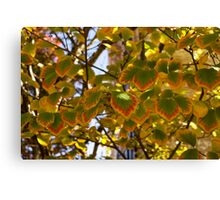 Rainbow Edges - Slowly Changing Leaves, Celebrating the Arrival of Autumn Canvas Print