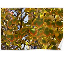 Rainbow Edges - Slowly Changing Leaves, Celebrating the Arrival of Autumn Poster