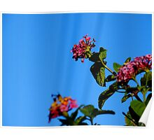 Sky Flowers Poster