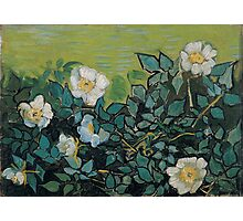 1890-Vincent van Gogh-Wild roses-24,5x33 Photographic Print
