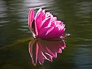 Reflection of Pink by Kathy Weaver