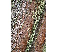 Bark Series - Stourhead #2 Photographic Print