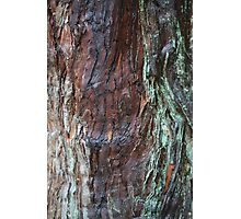 Bark Series - Stourhead #3 Photographic Print