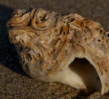 Weathered Whelk on Fahan Beach Sticker