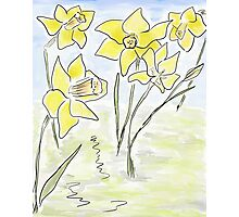 Bright Spring Daffodils (Digital Watercolour) Photographic Print