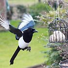 One for sorrow - image 1 by missmoneypenny