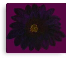 Black Dahlia Flower Canvas Print