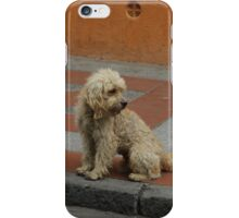 Stray Dog iPhone Case/Skin