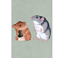 2 Hamster 1 Seed Photographic Print
