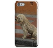 Dirty Stray Dog iPhone Case/Skin