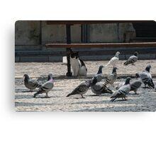 Cat amongst the pigeons Canvas Print