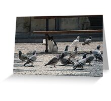 Cat amongst the pigeons Greeting Card