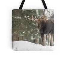 Bull moose in winter Tote Bag