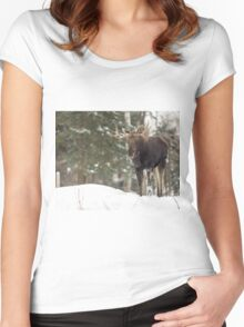 Bull moose in winter Women's Fitted Scoop T-Shirt
