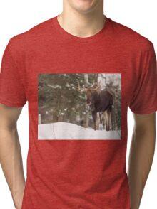 Bull moose in winter Tri-blend T-Shirt