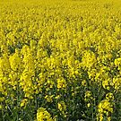 They Called It Mellow Yellow by Francis Drake