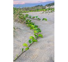 cable beach sand dunes plants  Photographic Print