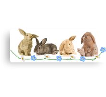 Easter Bunnys Canvas Print