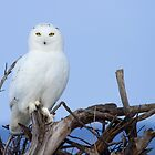 Posing for Playbird by Heather King