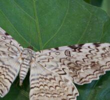 White Witch Moth Sticker