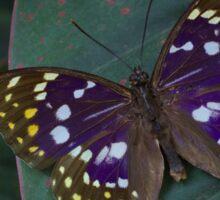 Japanese Emperor Butterfly Sticker