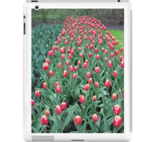 Two-Tone Tulips - Keukenhof Gardens iPad Case/Skin