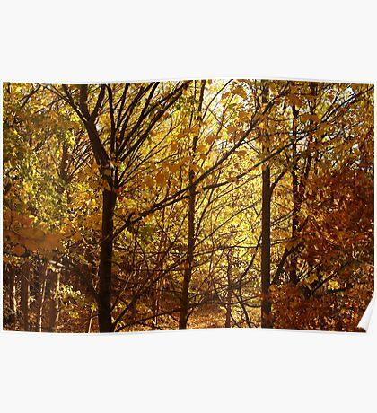 Joe Mortelliti Gallery - Spectacular autumn colours, Clunes, western Victoria. Poster