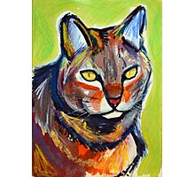 Nutmeg the Farm Cat in Bright Sun Photographic Print
