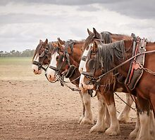 Working Horses by Linda Lees
