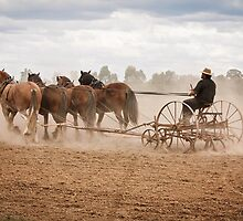 Ploughing the Field by Linda Lees