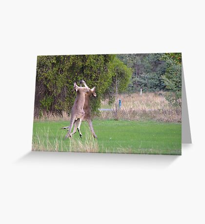 Kangaroos Greeting Card