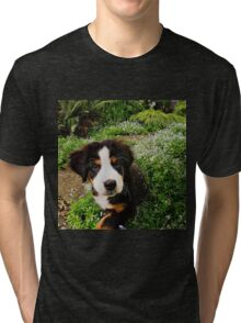 Puppy Art - Little Lily Tri-blend T-Shirt