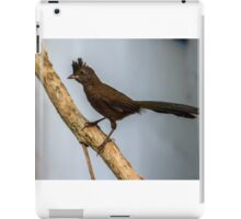 Baby Whipbird at iso 1600 iPad Case/Skin