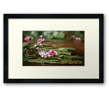 wildflower red lotus Framed Print