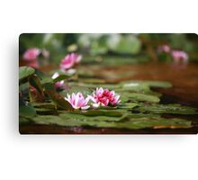 wildflower red lotus Canvas Print