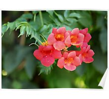 flowers red bells on green Poster