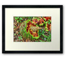 Hoop Pine Fruit Patterns Framed Print