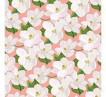 Magnolia Garden (pink) Photographic Print