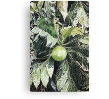 Breadfruit Canvas Print