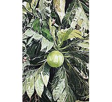 Breadfruit Photographic Print