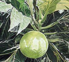 Breadfruit Sticker