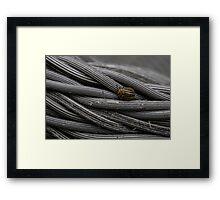 Beetle Stripes Framed Print