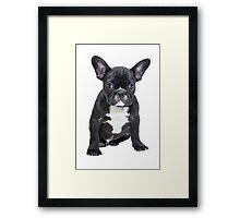 Black Bulldog Love Framed Print
