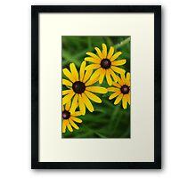 Black eyed Susans by bs hilton Framed Print